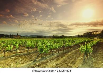 Orange Sky over Green Vineyard