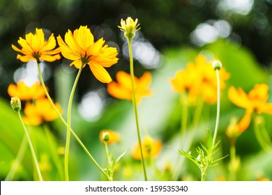 orange spring flowers  with green leaf