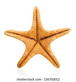 Orange starfish isolated on white background