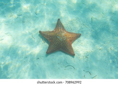 orange starfish in a turquoise water