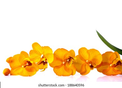 orange streaked orchid flower with leaf, isolated jn white