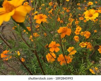 Orange summer flower in green garden