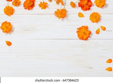 orange summer flowers on white wooden background