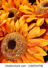 Orange sunflower display.