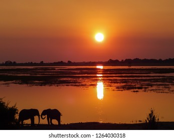 orange sunset at Chobe riverbank in Botswana with silhouettes of two elephants