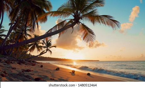 Orange sunset at the coconut palms beach. Palm trees on seashore landscape. The waves beat on the sand on a sandy beach. Sunset over the sea amazing landscape.