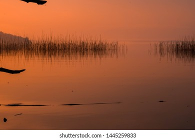 Orange sunset lake with bullrush.