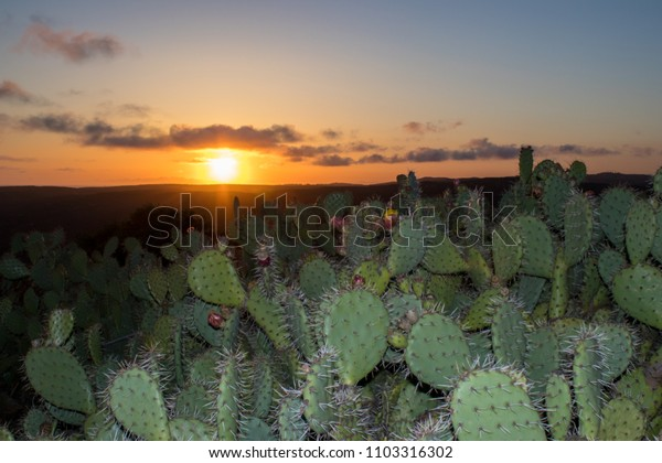 Orange sunset over a canyon with cacti in the foreground in Laguna Beach California