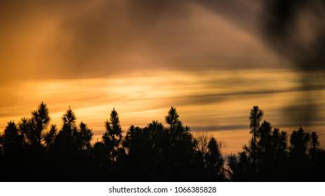 Orange sunset over the woods