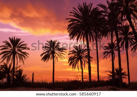 Orange sunset and palm trees in Spain