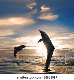 Orange sunset at the sea and two beautiful playful dolphins jumping up from water