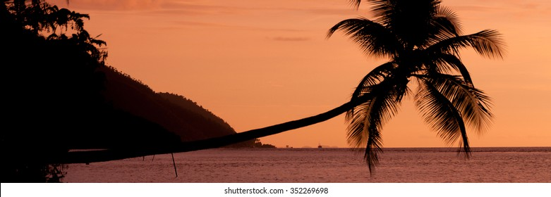 Orange sunset Silhouette of a horizontal palm tree hanging over the sea at a beach in Raja Ampat, Papua New Guinea, Indonesia