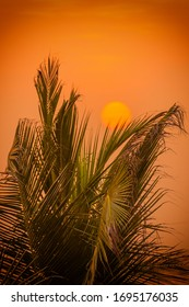 Orange sunset with sun and green palm tree on front