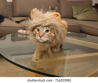 orange tabby in adorable lion mane costume on living room table