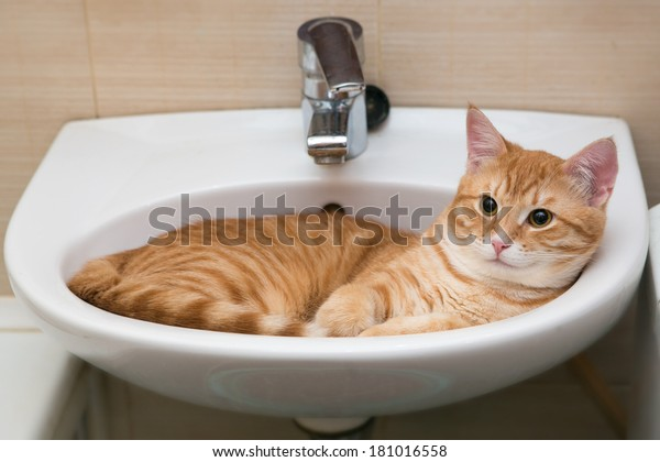 Orange tabby cat lies in the white laver
