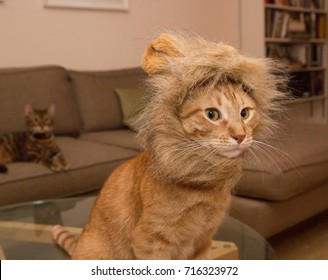 orange tabby cat in lion costume - kitten with fake ears and mane