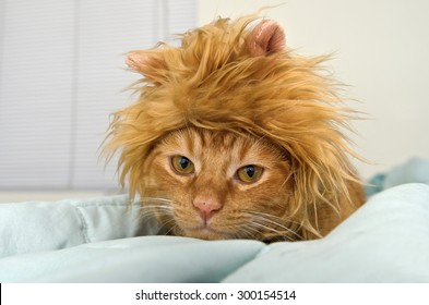 Orange tabby cat in lion head costume on bed