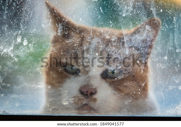 An orange Tabby cat looks through a foggy, scratched, dirty window, hoping to gain entry during the Coronavirus (Covid19) pandemic crisis.