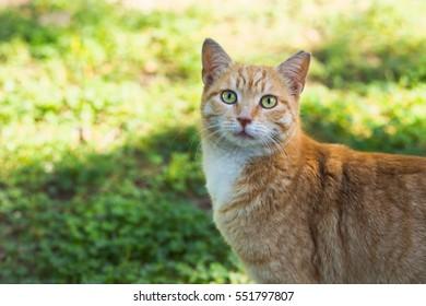 Orange tabby cat outside background.