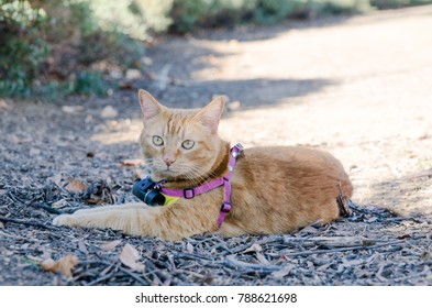 Orange Tabby Cat at the Park