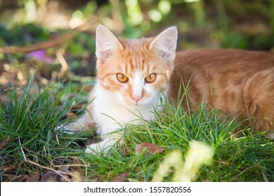 Orange tabby cat playing in the garden