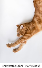 Orange tabby cat profile with paws outstretched looks like Super Kitty saving the world
