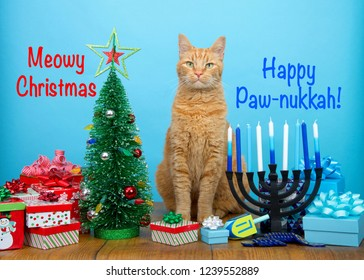 orange tabby cat sitting between a Christmas tree and a Hanukkah Menorah, looking at viewer. Many multi faith families celebrate both Xmas and Hanukkah. Punny text Meowy Christmas Happy Paw-nukkah