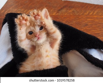 An orange tabby kitten lays on his back with his paws in the air, looking at the camera. So cute!