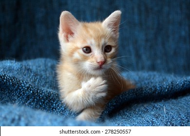 Orange tabby kitten, paw up looking sideways