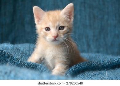 Orange tabby kitten, portrait, with ears perked up looking