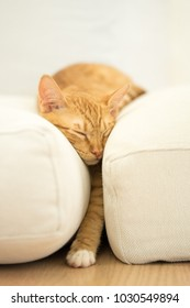 Orange tabby kitten sleeping between two white pillows with minimalist surroundings