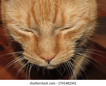 Orange Tabby with Long Whiskers