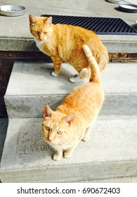 Orange tabby taunts or photobombs an orange tabby on a step below by sticking its tongue out at it.