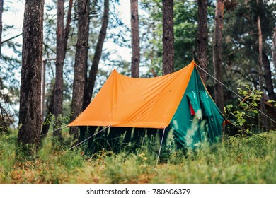 orange tent in a pine forest in the grass