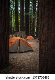 Orange tents at forest campgrounds