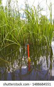 the orange tip of fishing float sits vertically in the water next to a thicket of grass, closeup
