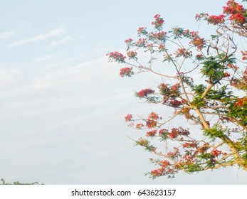 orange  tree flowers on blue sky