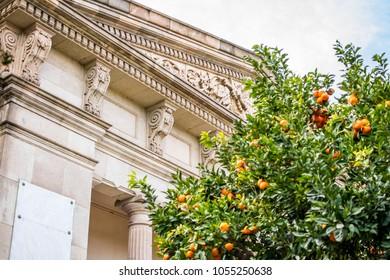 Orange tree in fron of old building