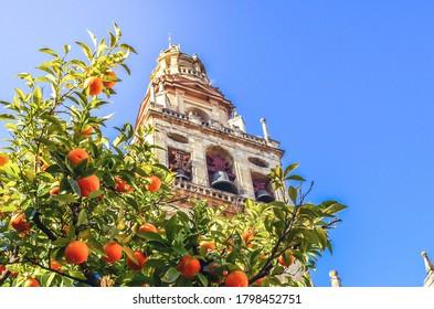 Árbol de naranja con torre de la mezquita de Córdoba