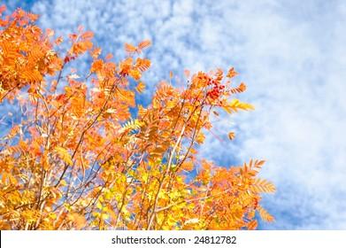 orange tree on blue sky