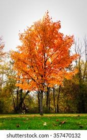 Orange tree in park