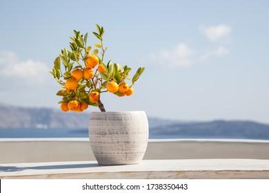 orange tree in a pot blue sea in background