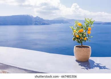 Orange tree in the pot at the terrace with sea view. Santorini, Greece..
