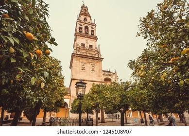 Orange trees garden around bell tower of the famous moorish Mezquita, Mosque-Cathedral of Cordoba, Spain. UNESCO heritage site.