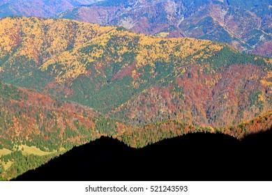 Orange trees spread on a hillside in autumn