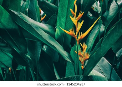 orange tropical exotic flowers blooming on lush leaf in rainforest