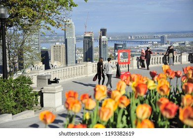 Orange tulips are in bloom on the belvedere of Mont Royale overlooking the city skyline.