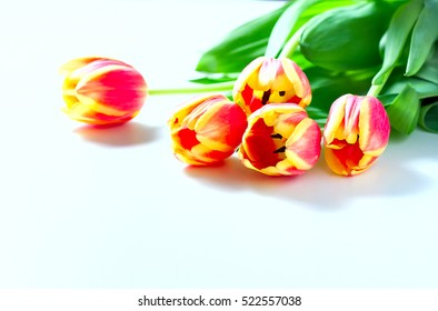 Orange tulips and cat kittens love heart valentine romance on white background. Selective focus