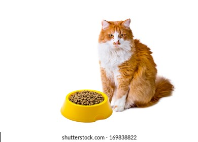 Orange and white cat with cat food looks with interest