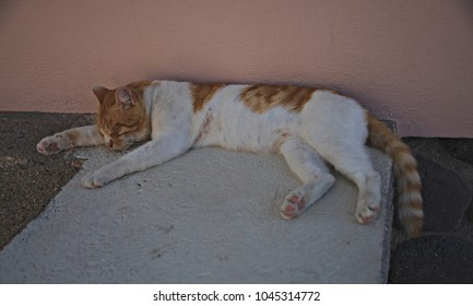 Orange and white cat relaxing on the ground of a street.